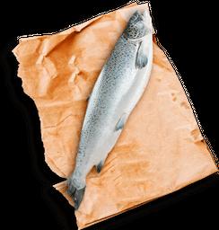Salmon Entero