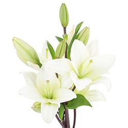 Flores Naturales 1 U