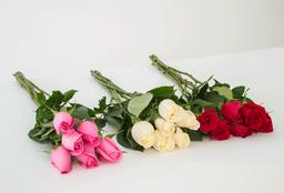 Rosa de 6 U