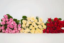 Rosa de 24 U