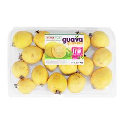 Guava Guayaba