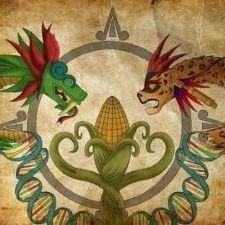 Elotes Mayas.